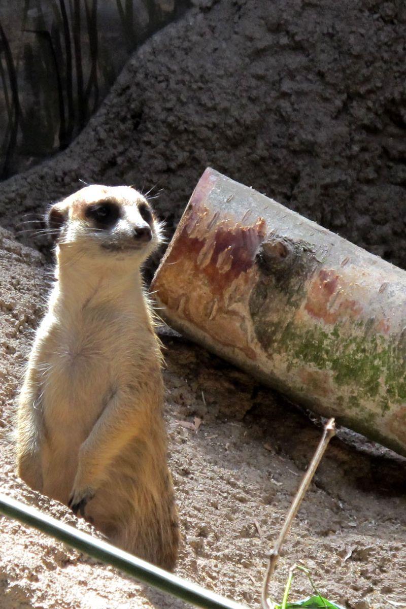 Ami-Zoo